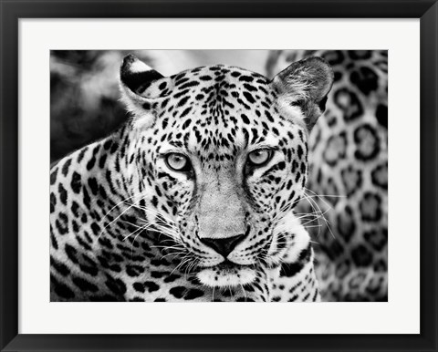 Framed Young Leopard Print