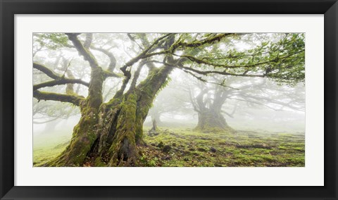 Framed Laurel Forest in Fog, Madeira, Portugal Print