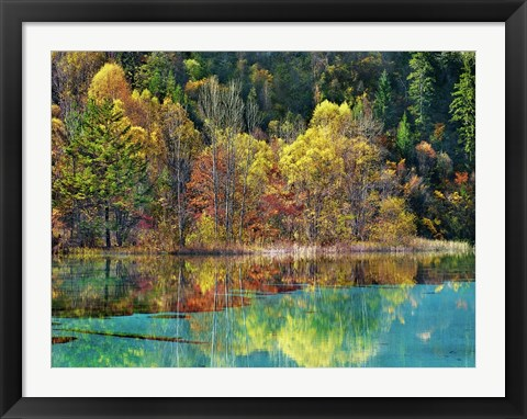 Framed Forest in autumn colours, Sichuan, China Print
