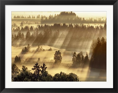 Framed Fog Impression At Sindelbachfilz, Bavaria, Germany Print