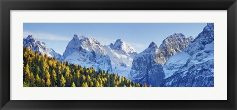 Framed Larch Forest And Cima Bel Pra, Italy Print