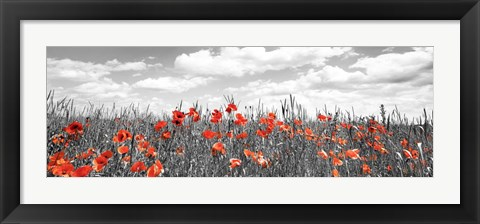 Framed Poppies In Corn Field, Bavaria, Germany Print