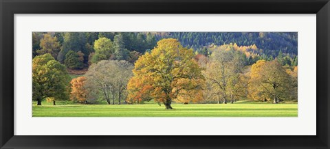 Framed Mixed Trees in Autumn Colour, Scotland Print