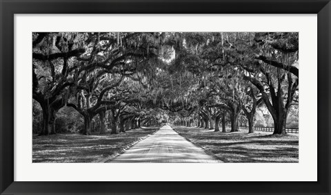 Framed Tree Lined Plantation Entrance,  South Carolina Print