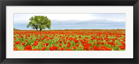 Framed Tree in a Poppy Field 1 Print