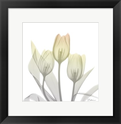 Framed Sunday Morning Tulips Two Print
