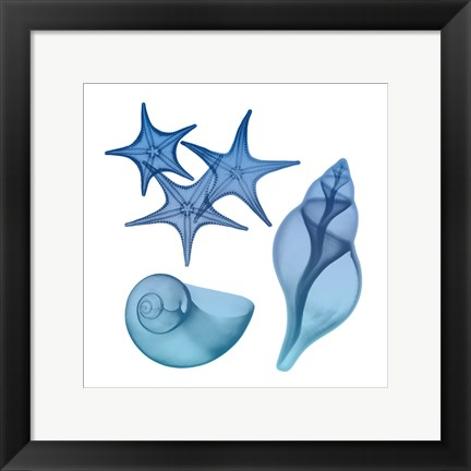 Framed Blue Ombre Sea Life Print