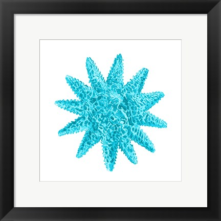 Framed Blue Coral 5 Print