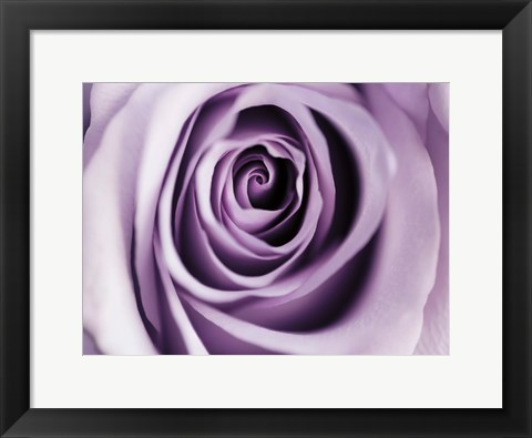 Framed Lavender Bloom Print