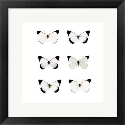 Framed Pale Butterflies 6 Print