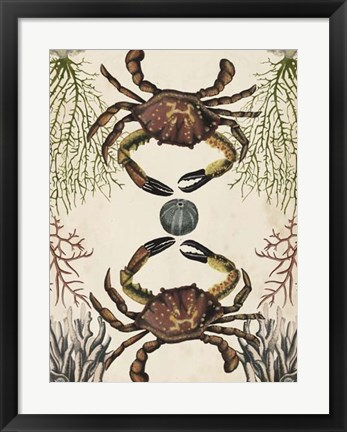 Framed Antiquarian Menagerie - Crab Print