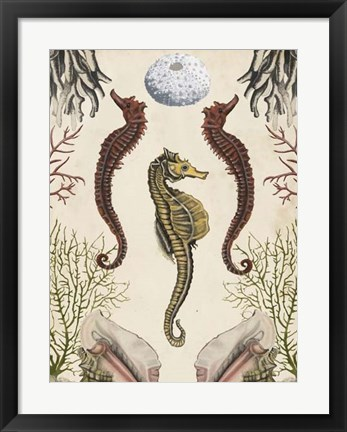 Framed Antiquarian Menagerie - Seahorse Print