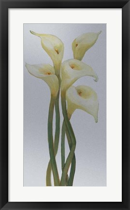 Framed Callas on Silver II Print