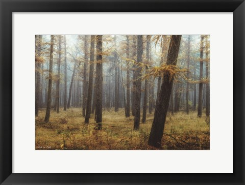 Framed Holterberg in the Mist Print