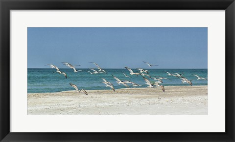 Framed Beach Skimmers Print