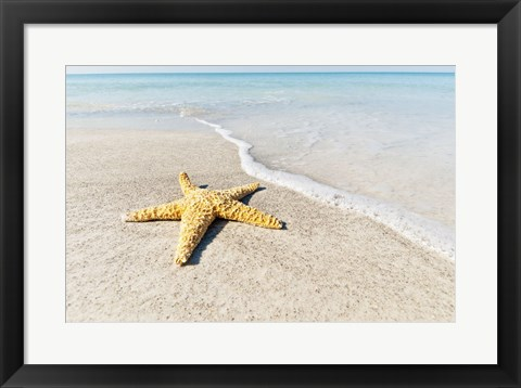 Framed Star Fish Line of Surf Print