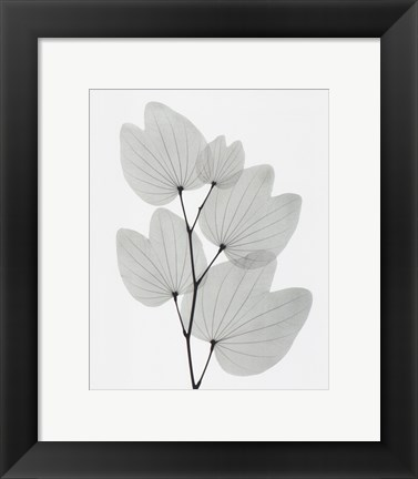 Framed Orchid Tree Print