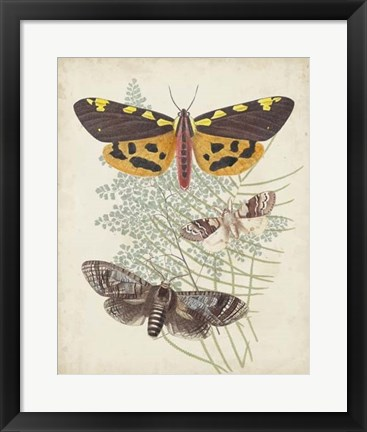 Framed Butterflies & Ferns VI Print