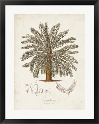 Framed Antique Tropical Palm I Print