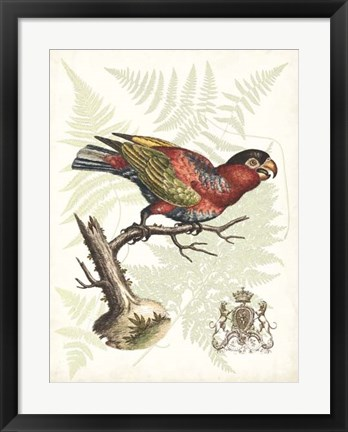 Framed Regal Parrots I Print