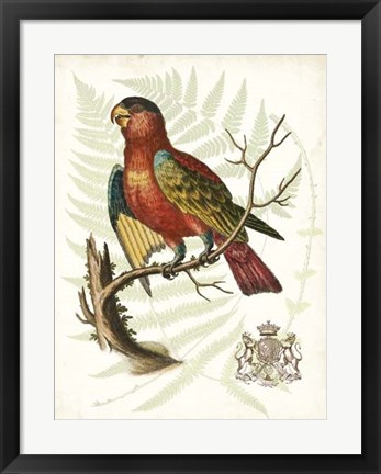 Framed Regal Parrots II Print