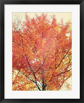 Framed October Tree Print