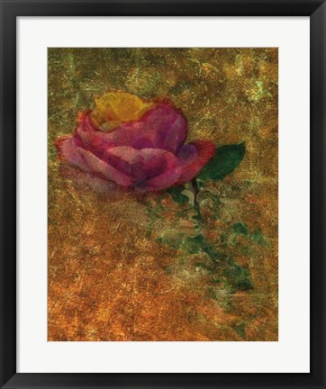 Framed Old Italy Roses Print