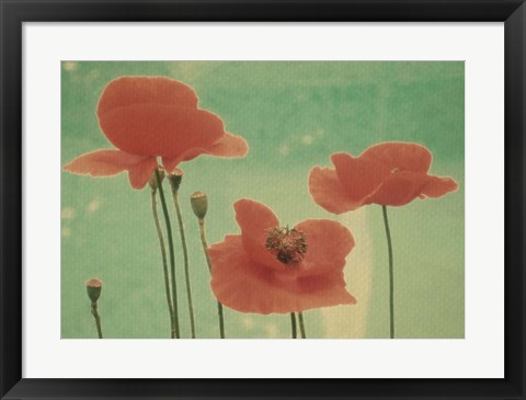 Framed Peaceful Poppies Print