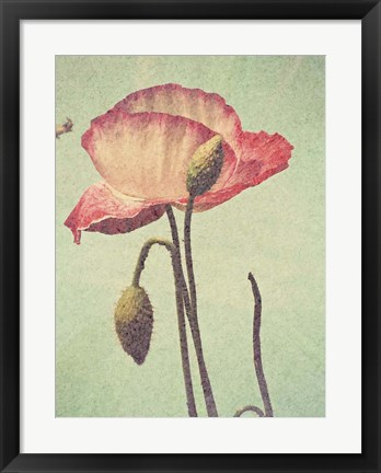Framed Poppy with Stem Print