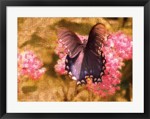 Framed Madam Butterfly Print