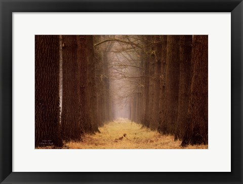 Framed Yellow Path Print
