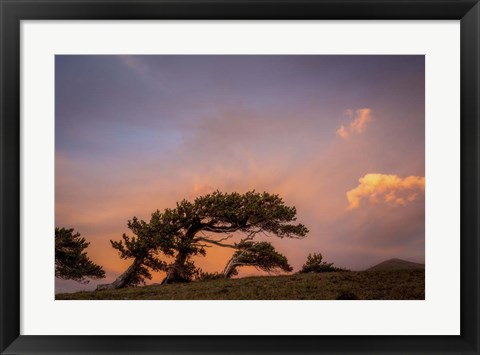 Framed Peaceful Tree Print