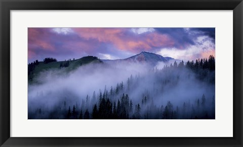 Framed Evergreens Fog Print