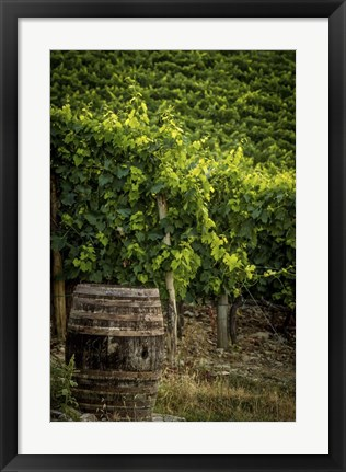 Framed Vines Print