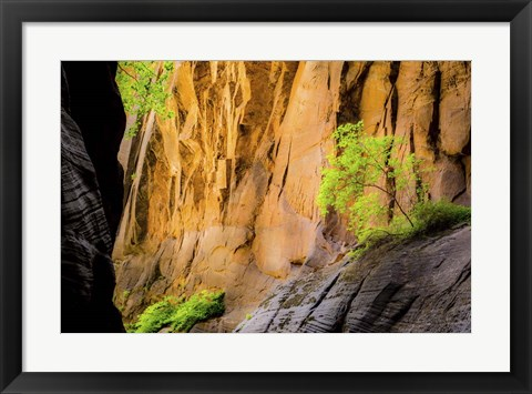 Framed Tree on Edge of Cliff Print
