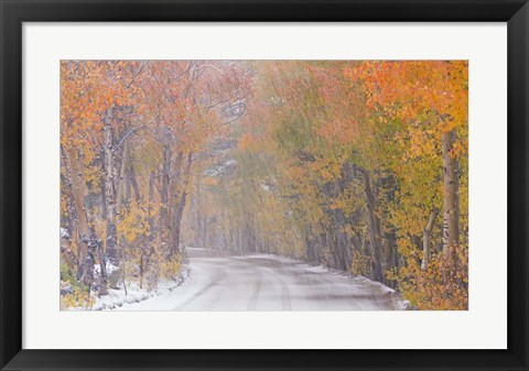 Framed Snowy Road Print