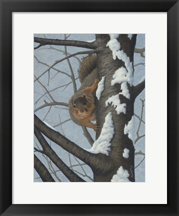 Framed What's Going On - Fox Squirrel Print