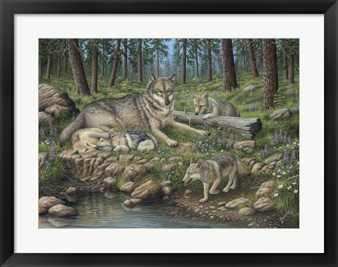 Framed Grey Wolf Mother And Pups Print