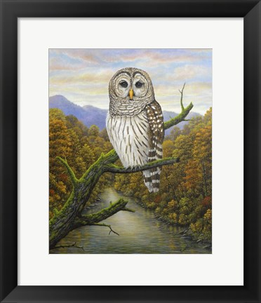 Framed Barred Owl Print