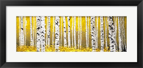 Framed Panor Aspens Yellow Floor Print