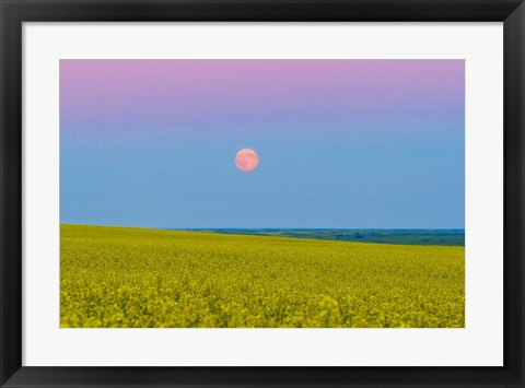 Framed Supermoon rising above a canola field in southern Alberta, Canada Print