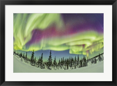 Framed Aurora borealis over Churchill, Manitoba, Canada Print