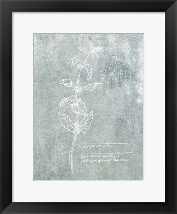 Framed Essential Botanicals III Print