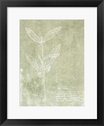 Framed Essential Botanicals IV Print