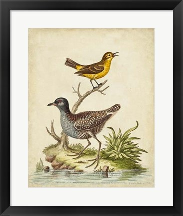 Framed Antique Bird Menagerie II Print