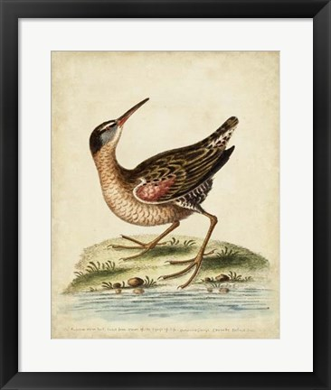 Framed Antique Bird Menagerie IV Print