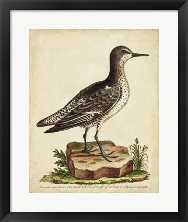 Framed Antique Bird Menagerie V Print