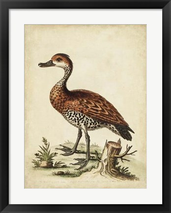 Framed Antique Bird Menagerie VIII Print
