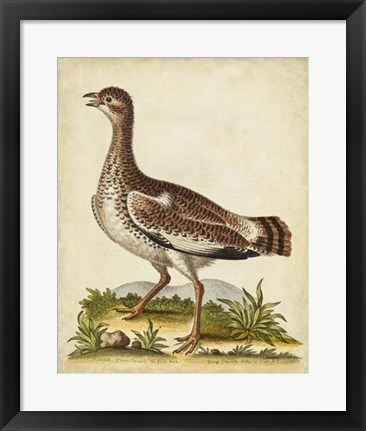 Framed Antique Bird Menagerie X Print