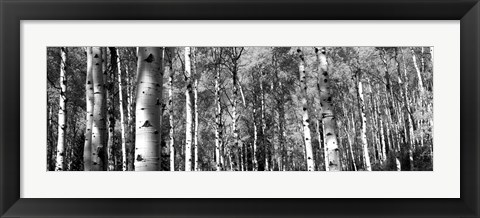 Framed Forest, Grand Teton National Park, Teton County, Wyoming Print